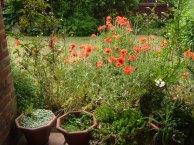 english-garden-summer-'09